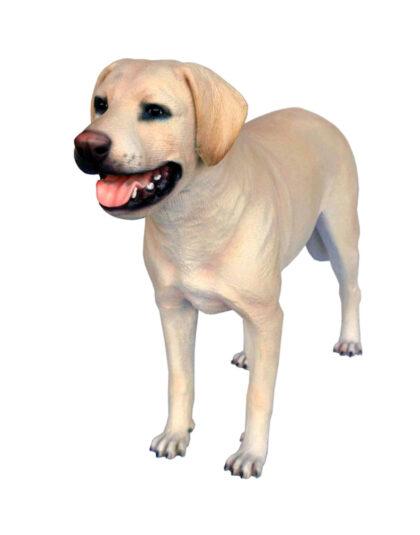 Härlig Labrador