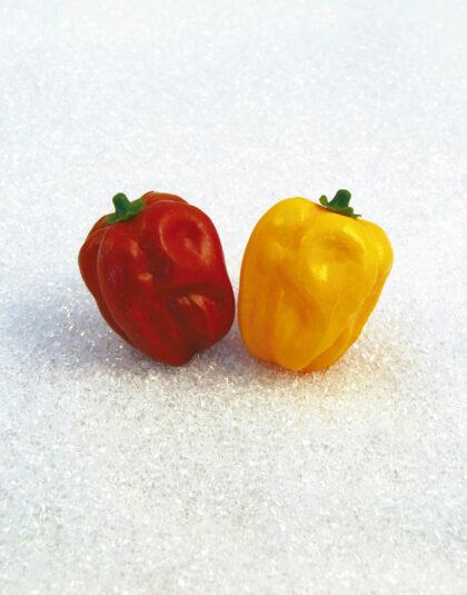 Röd Paprika