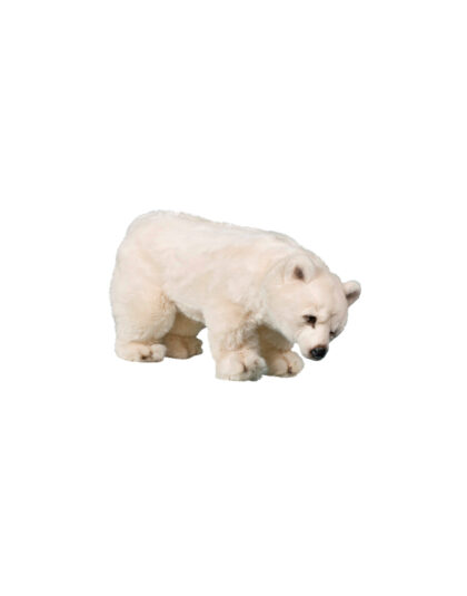 0332 Isbjörn unge