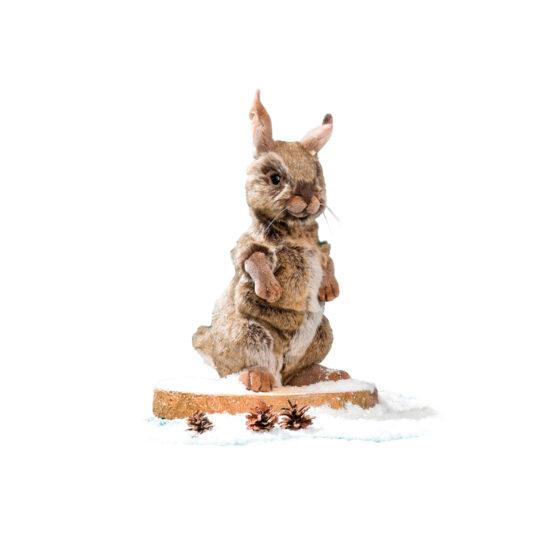 0777 Kanin brun sittande